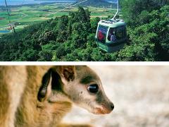 スカイレール+大自然動物探検ツアー(星空観測+オージーBBQ)