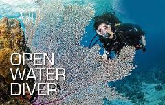 Hall's Complete Open Water Scuba Certification Course