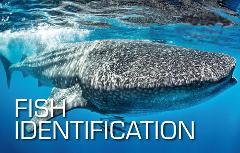 Fish Identification Specialty