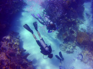 Guided Dive with Hall's Instructor during your Reef Trip (this is an add on to a trip reservation)