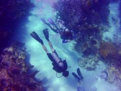 Guided Dive with Hall's Instructor during your Reef Trip