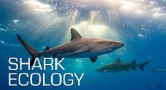 Shark Ecology Specialty