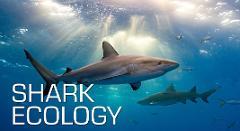 Shark Ecology Specialty