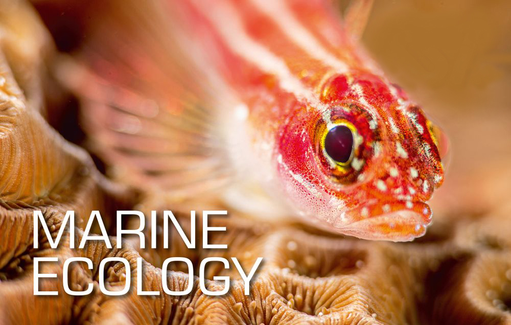 Marine Ecology Specialty Course