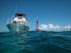 SNORKEL Reef Trip- Adult 12+