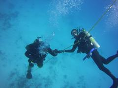 Refresher Scuba Course   with INSTRUCTOR