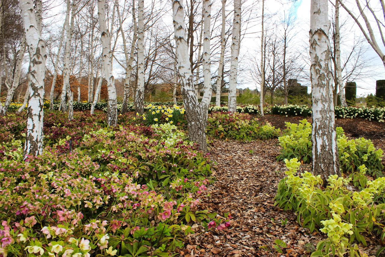 Mayfield Winter Festival - Access to parts (16 hectares) of the Hawkins' Family Garden and Mayfield Garden (15 hectares) - Group