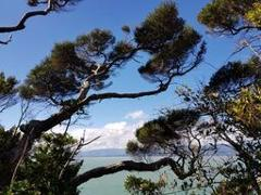 Day trip - Wellington Return - Eco Experience Rangatira Kapiti Island