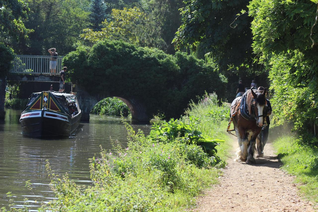 Godalming Horse Drawn Canal Boat with Cream Tea - Mon 20th May 2019