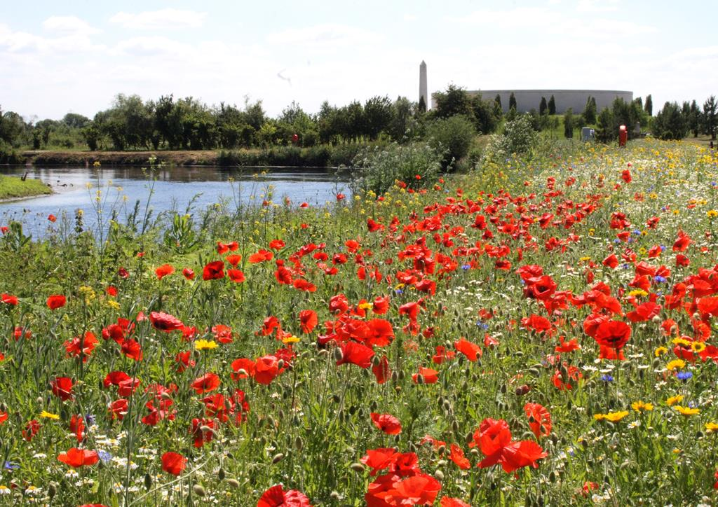 National Memorial Arboretum - Sun 7th April 2019