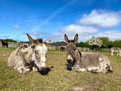 Isle of Wight - Busy Bees & Donkeys! - Tue 12th Oct 2021
