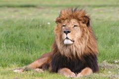 Longleat Safari Park - Tue 17th April 2018