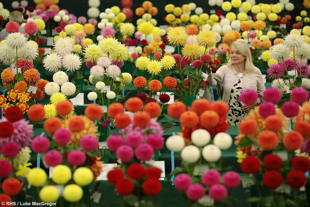 RHS Garden Wisley Flower Show, Surrey - Tue 3rd Sept 2019