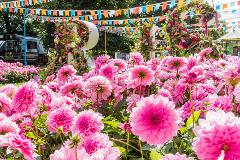 RHS Hampton Court Palace Garden Festival - Thu 8th July 2021
