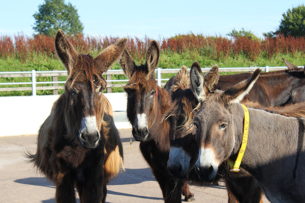 Sidmouth & The Donkey Sanctuary - Tue 26th March 2019
