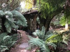 Mount Wellington Summit Descent & Pipeline Track. Includes bike hire. Beginner friendly. Minimum 2 people.