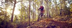 3 Day Tour - Hobart & Maydena
