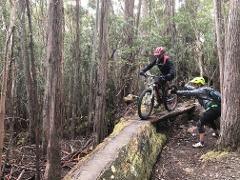 Mt. Wellington/Kunanyi MTB Shuttle: North-South Track (pick up from Glenorchy MTB Park and South Hobart)