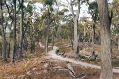 5 Day Tour (self-guided) - Hobart, St Helens, Derby