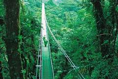 Selvatura Treetop Walkways - Suspension Bridges.