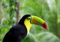 Curi Cancha Cloud Forest  GUIDED TOUR