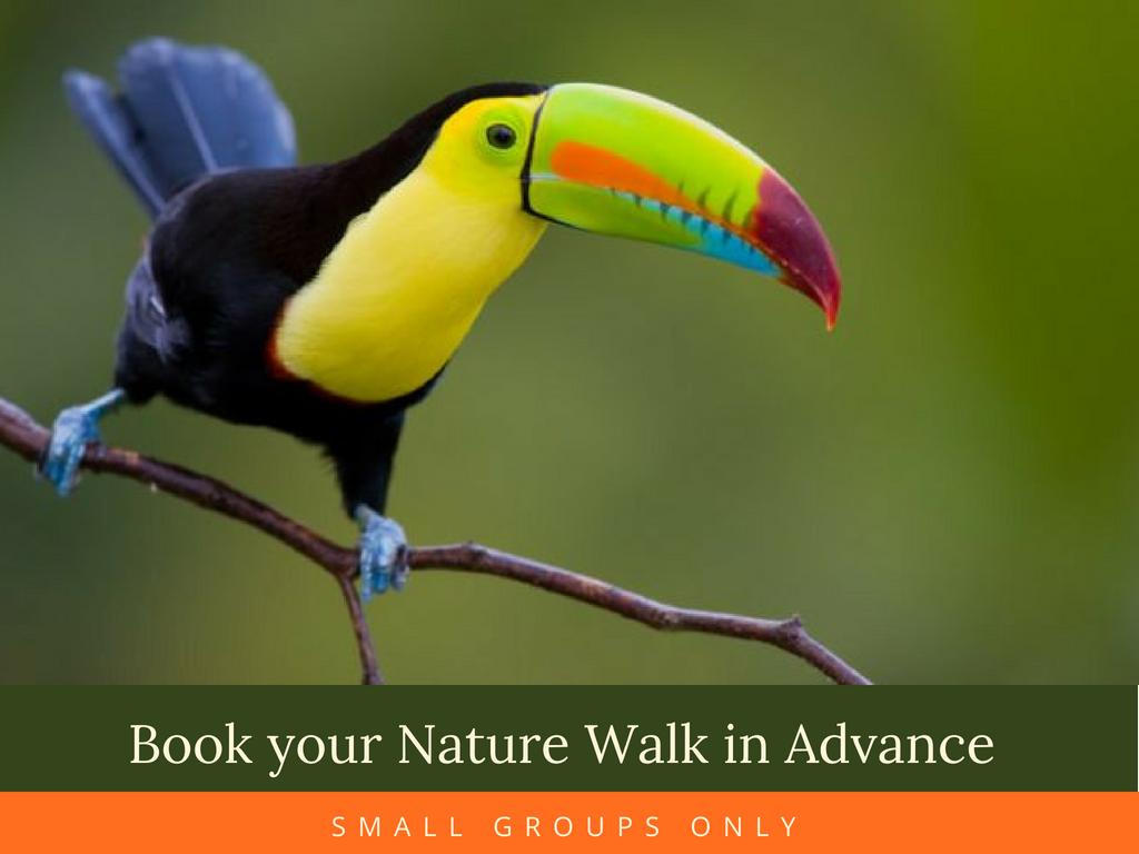 Monteverde Cloud Forest Nature Tour