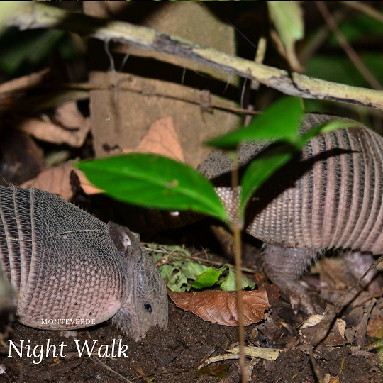 Monteverde Night Walk Tour