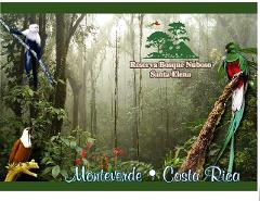 Santa Elena Cloud Forest Tour
