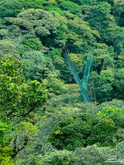 Monteverde Sky Walk Hanging Bridges Tour