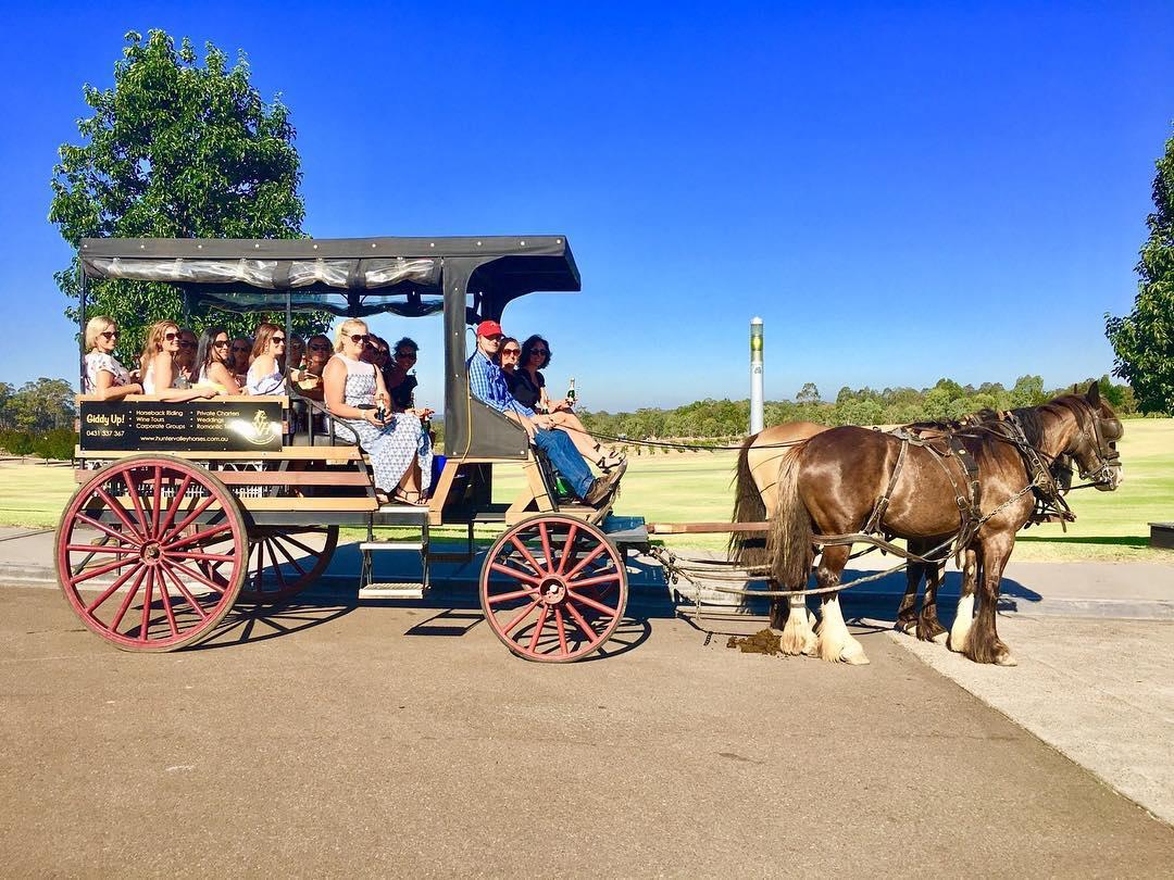 45-minute Vineyard Horse-Drawn Carriage Ride