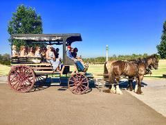 45-minute Vineyard Horse-Drawn Carriage Ride
