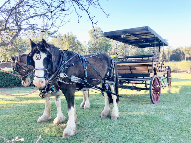 Taste The Valley - FULL DAY Horse Carriage Wine Tour with Lunch
