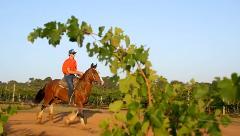 Advanced Horse Ride 50-minute Private