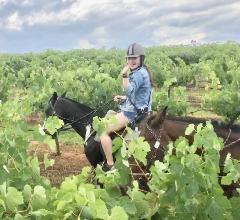 2-hour Horseback Vineyard Trail Ride