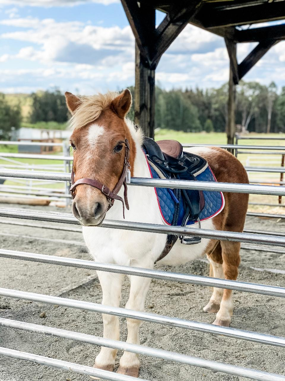 10-minute Child Pony Trek