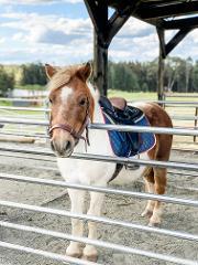 10-minute Child Pony Trek