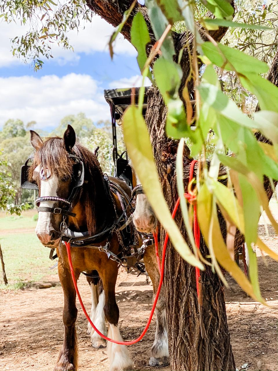 Harvest the Hunter Horse and Carriage Wine and Produce Tour