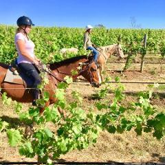 1-hour Horse Ride Vineyard Trail