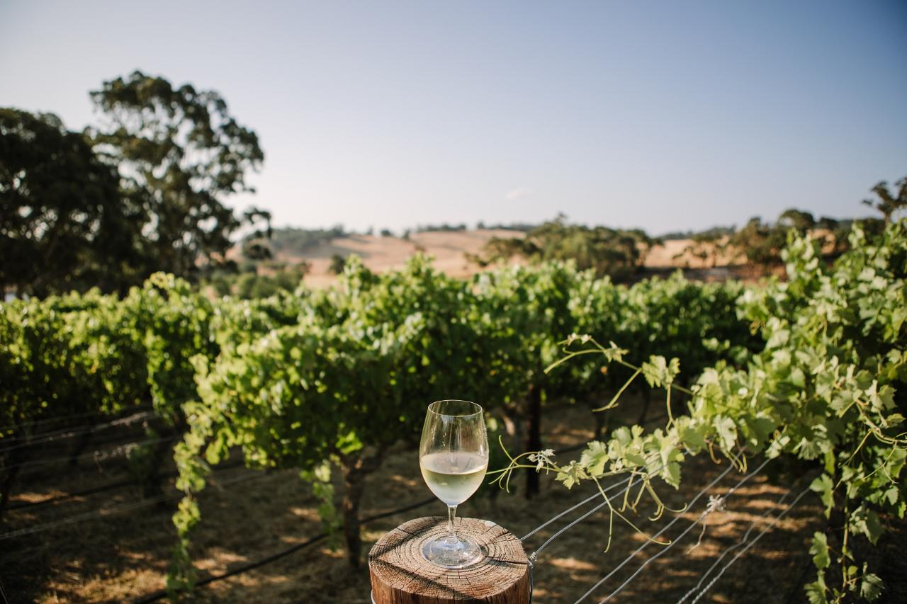 Sophie's Hill Tasting Experience