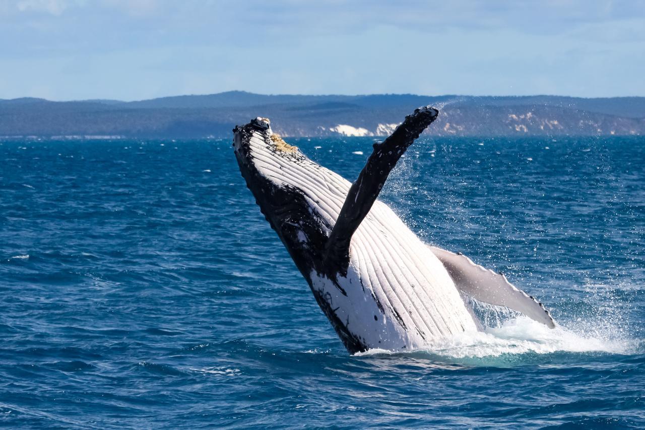 6 Hour Whale and Walk Safari