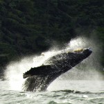 Private Whale Watch for up to 6 passengers
