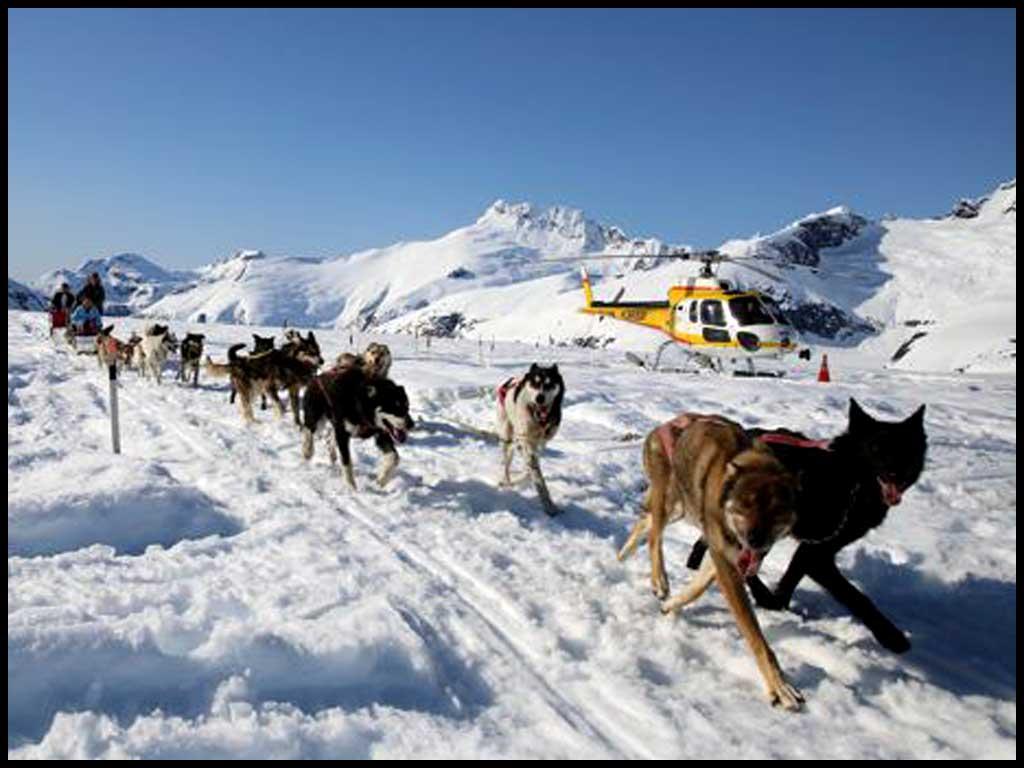 Helicopter Dogsled - Herbert Glacier