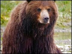 Pack Creek Brown Bear Viewing & Kayak