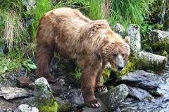 Wilderness Bear Viewing
