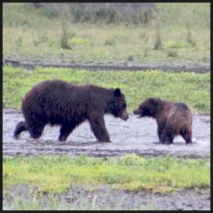 Brown Bear Wilderness