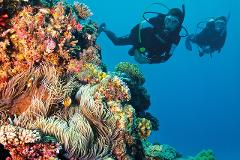 Explore - Outer Great Barrier cert. Dive