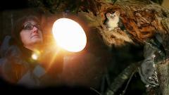 AUS Ecoadventure Tours - Spotlighting (3 hrs, from twilight)
