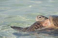 Heron Island: Nature's Wonderland - Short Break