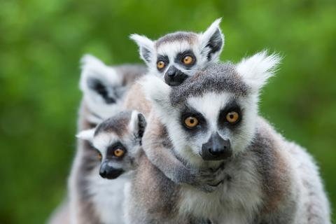 The Soul and Spirits of Madagascar