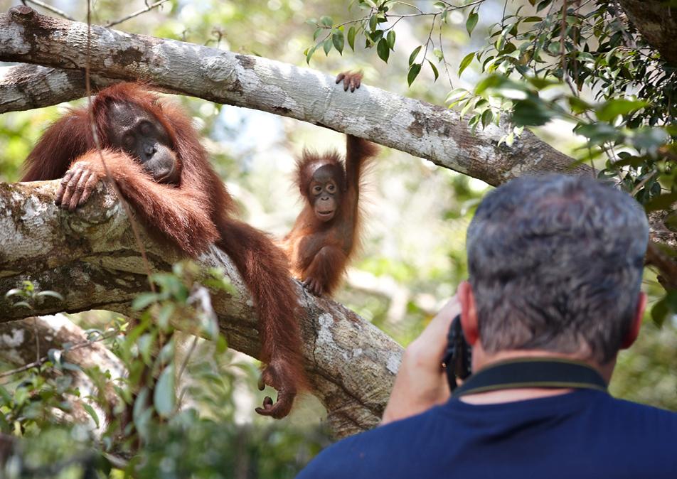 Tanjung Puting Orangutan Experience